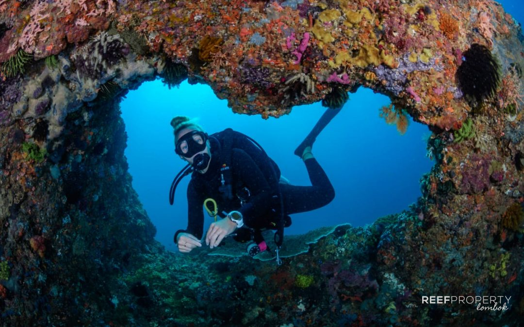 Discover the Underwater World of South East Lombok
