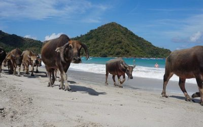 Reef Property in the News: Lombok Tourism Market on the Rebound